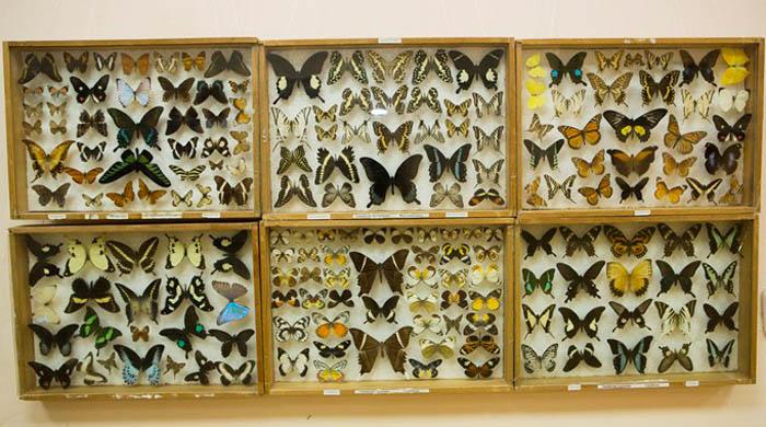 Энтомологическая коллекция